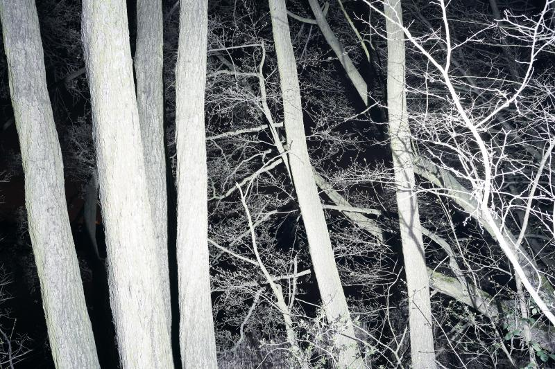 'Straight From The Forest' - personal project by Tomek Albin   Photographer
